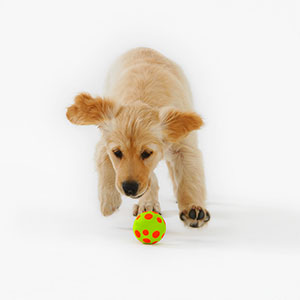 Logo: Dog (Russell Glenister/image100/Corbis)