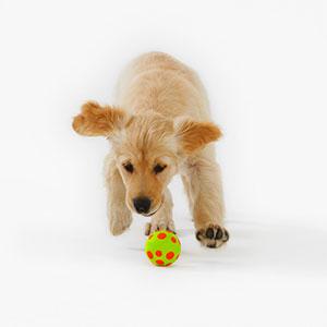 Logo: Dog (Russell Glenister/image100/Corbis)