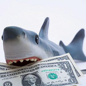 A toy shark holding U.S. dollar bills, Diane Macdonald, Photographer