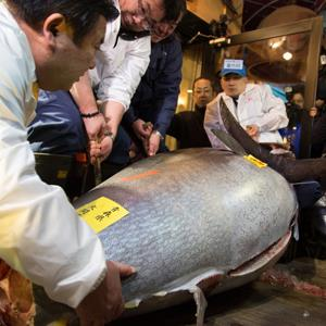 Kiyoshi Kimura, president of Kiyomura K.K., left, helps carry a fresh whole tuna weighing 222 kilograms (489 pounds) in Tokyo, Japan, on Saturday, Jan. 5, 2013 (Noriyuki Aida/Bloomberg via Getty Images)