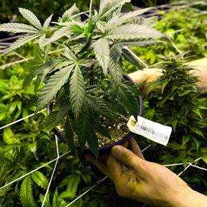 Credit: 694880562092