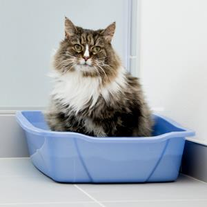 Cat in a litter box (© Vstock LLC/Getty Images)