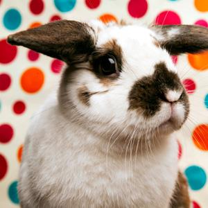 Stock photo of a bunny against a polkadotted background (© Cavan Images/Getty Images)