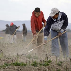 Undocumented workers till an asparagus field near Toppenish, Wash., on the Yakama Indian Reservation (© Elaine Thompson/AP Photo)