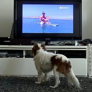 A dog watches DOGTV at a home in San Diego, Calif. (copyright WENN.com)
