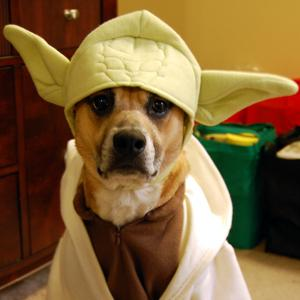 Credit: Colure, Flickr