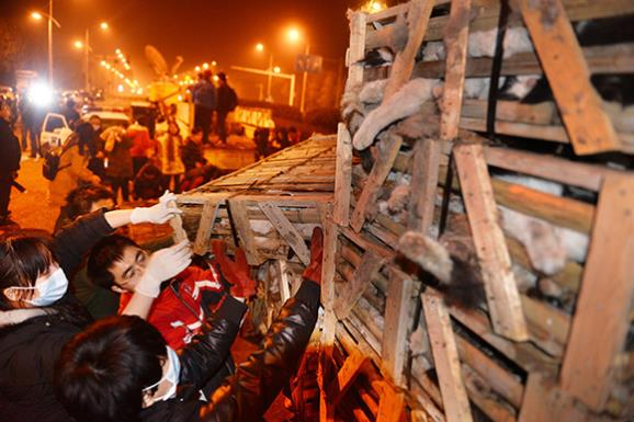 A truck packed with 1,000 cats. Image: HAP/Quirky China News/Rex Features