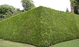 File photo of a hedge (© G Fletcher/Getty Images)