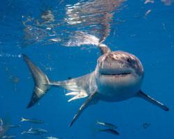 Expliquez-nous : les requins