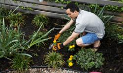 Expliquez-nous : le jardinage en hiver