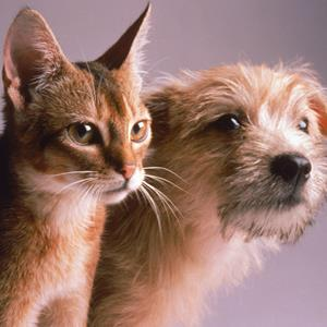 Portrait of a dog and cat © Daniel Fort/Getty Images