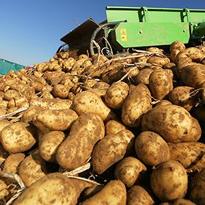 Credit: © Fotosearch/Getty Images