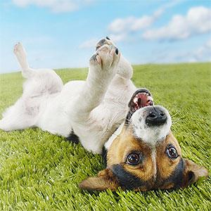 Dog (© moodboard/Corbis)