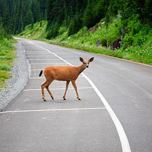 © Craig Tuttle/Getty Images